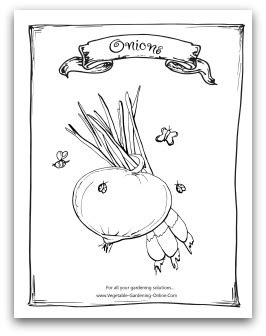 vegetable garden coloring books printable activity