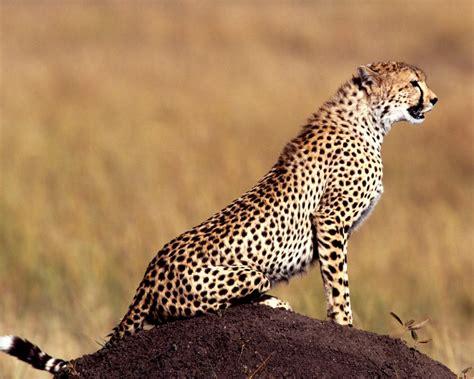 Amazing Animal Wallpapers - new 60 amazing animals wallpapers