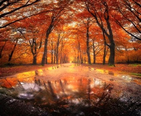 Rainy Fall Day  Other & Nature Background Wallpapers On