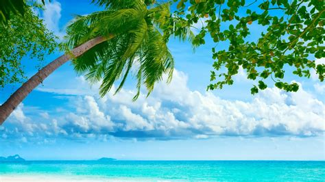 summer wallpapers and backgrounds hd