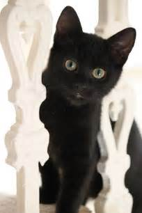 Cute Black Cat