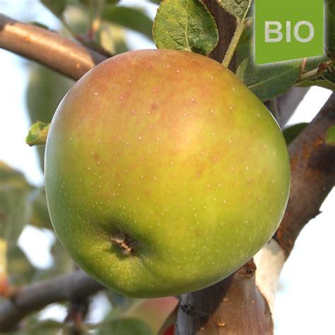 Miete Für Den Herz Apfel Garten Für 3 Bio Apfel Grüner Winterstettiner Der Herzapfelhof Im