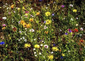 Blumenarten Az Mit Bild : blumen pflanzenlexikon ~ Whattoseeinmadrid.com Haus und Dekorationen