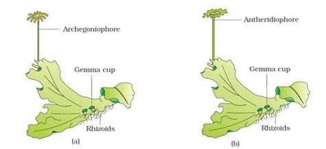bryophyta biologyisc