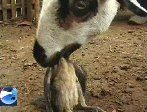 inilah foto  hewan unik  aneh  dunia renungan
