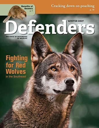 winter  defenders  wildlife