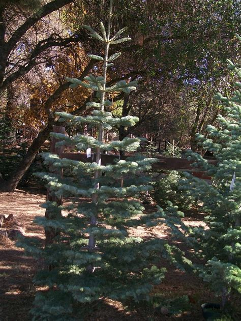 pin by kerin kay on christmas trees pinterest