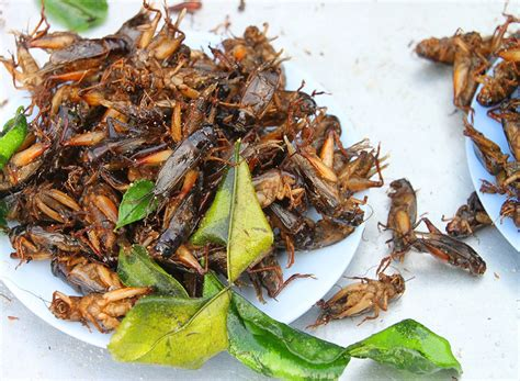insecte cuisine you are bugs without even knowing it eat this not