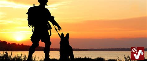military working dogs   unique skills  services