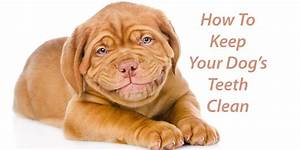 keep your new puppys teeth clean