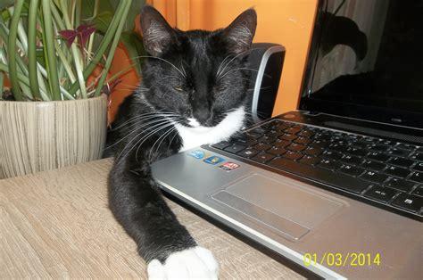 kot czarno biały biuro rzeczy znalezionych i zgubionych