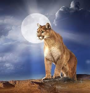 HD wallpapers ipad mountain lion wallpaper