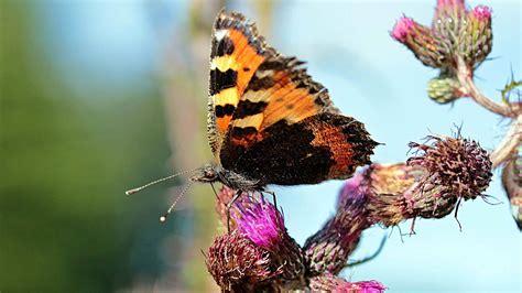 Garten Pflanzen Schmetterlinge fortpflanzung pflanzen fortpflanzung bei pflanzen