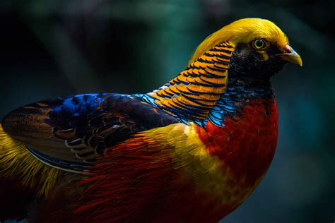 most colorful birds thursday june 20 birds of and monkeyland photos