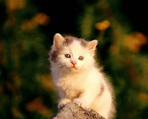 Wallpaper Cute Photos: Cute Kittens Wallpapers