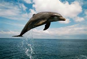 Dolphins Jumping in Air