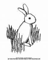 Grass Pages Colouring Coloring Easter Bunny Christmas Sheets Printable Searches Recent Coluring sketch template