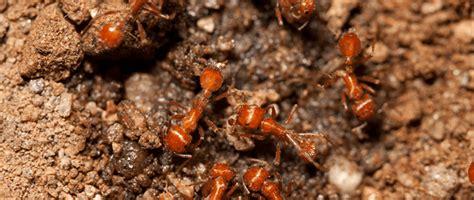 Jade Garden Sayville by I Ants In My Garden Garden Ftempo