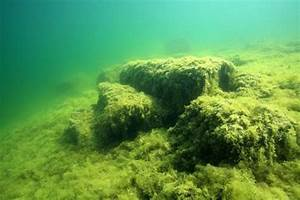 Algen Im Teich Entfernen : algen im aquarium erfolgreich und dauerhaft bek mpfen ~ Orissabook.com Haus und Dekorationen