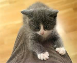 gray cat names grey and white kitten names search engine at