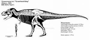 Tyrannosaurus Rex Skeletal Diagram  Bhi 3033  By Franoys