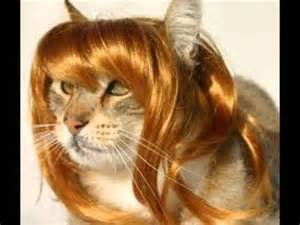 cat wigs cats with wigs