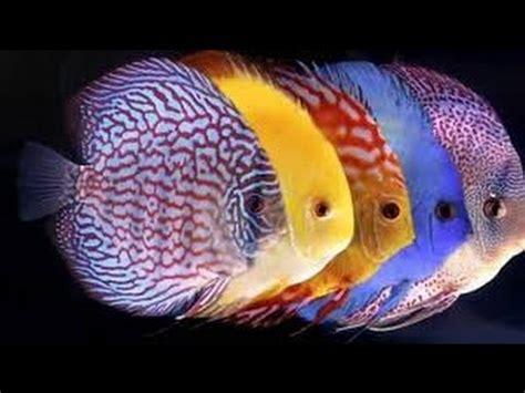 tips  buying aquarium fish youtube