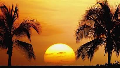 Hawaii Background Mcintosh Janelle