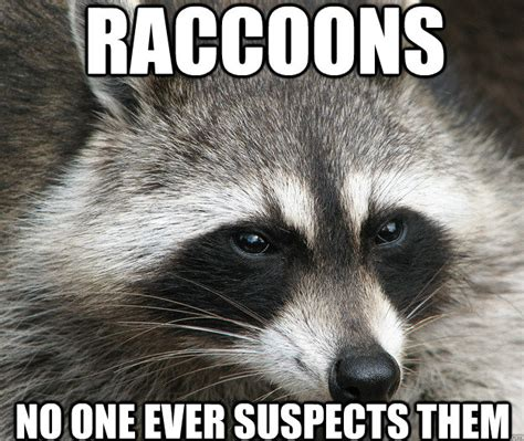 Funny Raccoon Meme - speak of the devil blessed are the cheesemakers