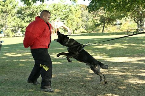 images  policedogs patrol  police dogs
