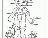 Coloring Preschool Parts Pages Worksheets Human Preschoolers Clipart Worksheet Toddlers Printables Animal Organ Theme Sheets Kindergarten Activities Printable Pre Ages sketch template