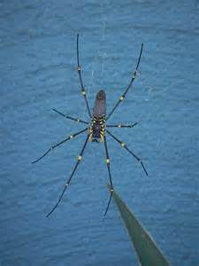Scary Non-Poisonous Spiders