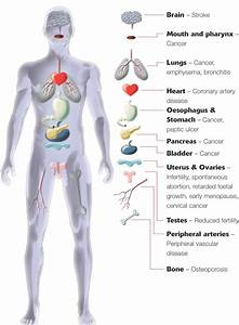 Major Organs Of The Human Body For Kids Human Body Anatomy