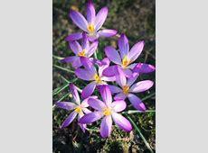 Blumenbilder Blumen kostenlose Bilder herunterladen