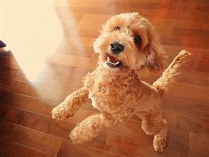 The 12 Cutest Mixed Breed Dogs | Dog Reference