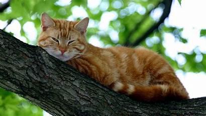Cat Wallpapers Cats Kitten Kitty Funny Tree