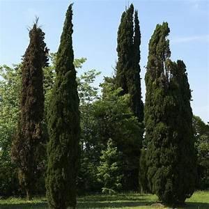 Haie Pas Cher Qui Pousse Vite : arbres pour haie liste ooreka ~ Premium-room.com Idées de Décoration