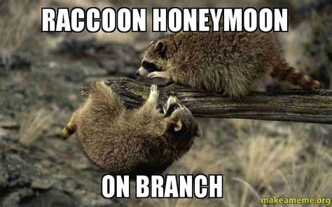 Honeymoon Meme - raccoon honeymoon on branch make a meme