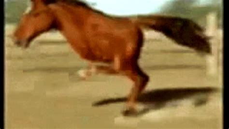 fastest horse