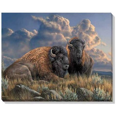 storm brewing bison wrapped canvas art