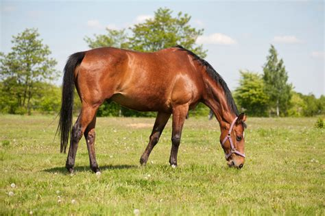 horses healthy horse secret grazing keep laminite prevenzione cause pasture pferd simple bedeutung affin stable thinkstock credit stablemanagement