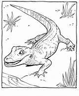 Coloring Alligator Pages Zoo Printable Animal Preschool Sheets Sheet Animals Raisingourkids Printing Adult Crocodile Alligators Crocodiles Rebels Royal Ever Getcoloringpages sketch template
