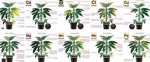 Identifying Cannabis Plants Problems Bonza Blog