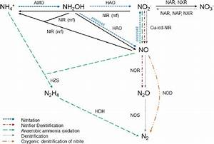 Web Of Nitrogen Conversion Reactions  Enzymes Involved In