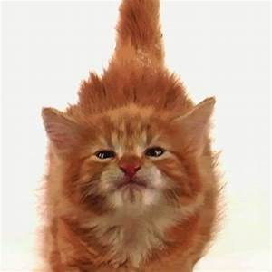 Cat GIFs - Find & Share on GIPHY