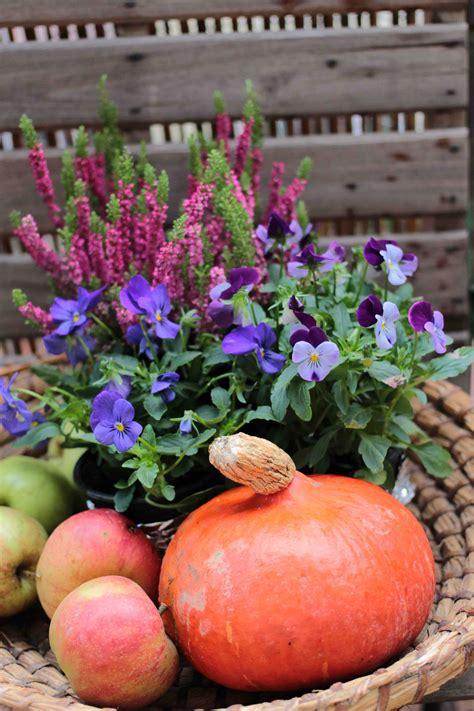 Herbstdeko Garten by Herbst Am Balkon Jetzt Auf Dem Garten Vom Garten
