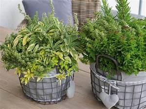 Kräuter Zusammen Pflanzen : kr uter mix f r den balkon ~ Whattoseeinmadrid.com Haus und Dekorationen