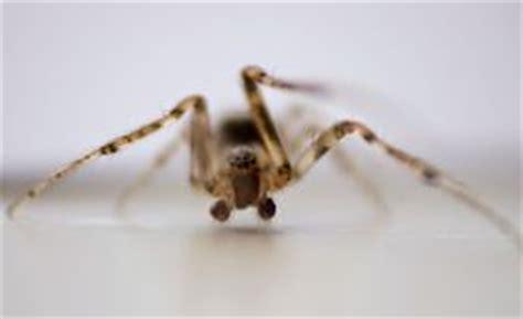 araign馥 dans la chambre araignée de chambre photo stock image 51323841