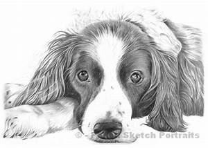 Pencil Pet Portraits From Photos Drawings Of Cats Dogs ...