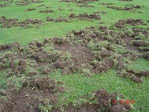 Löcher Im Rasen : wildschweinsch den auf dem fluggel nde platz zerst rt ~ Lizthompson.info Haus und Dekorationen